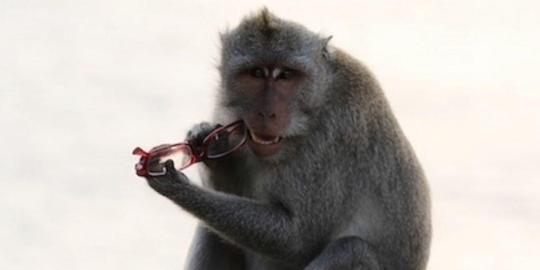 monkey & harmonica